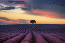 Lavender Sunsets in Bulgaria by Krasi Matarov