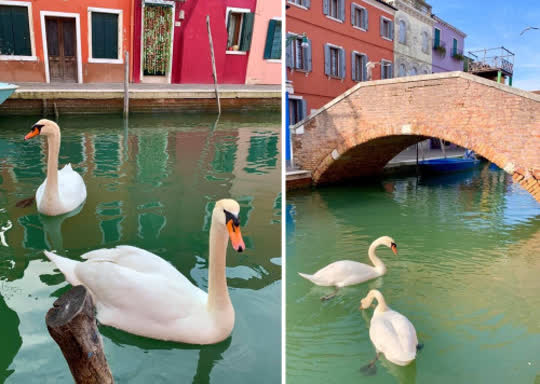 Elimination of Boat Traffic in Italy Attracts Wildlife and Creates Clear Water in the Canals